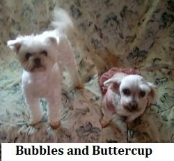 Bubbles and Buttercup